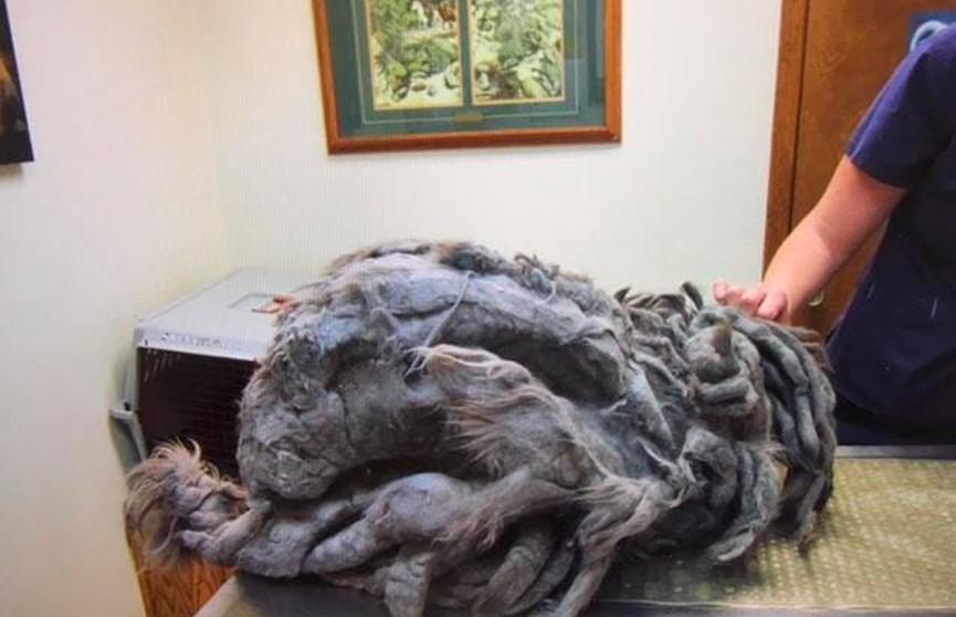 Странное лохматое существо подкинули в приют для животных в США