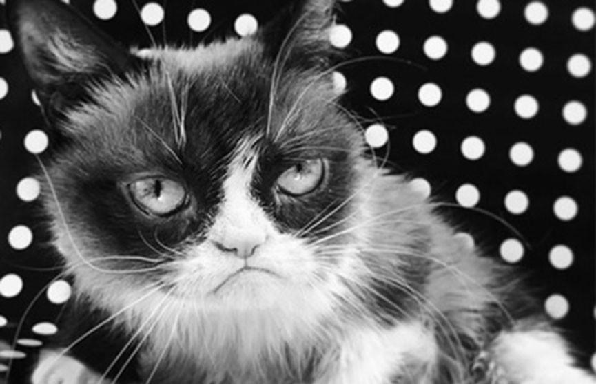 Легендарная Grumpy Cat (Сердитая кошка) умерла в возрасте семи лет