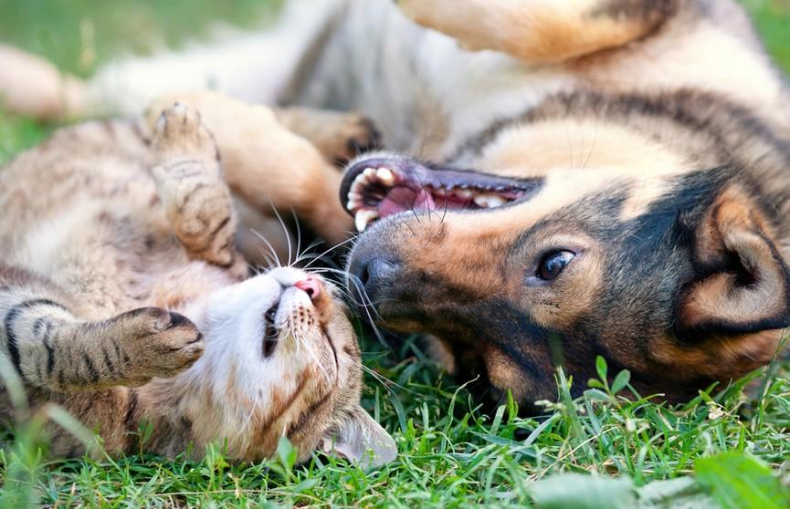 Общение высокомерной кошки и болтливого пса заставили интернет хохотать! (ВИДЕО)