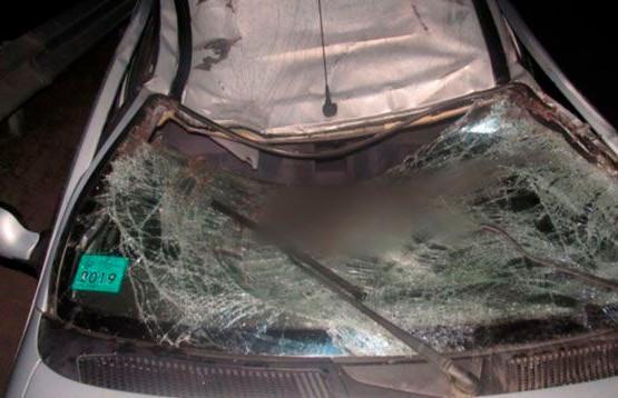 Машина столкнулась с лосем в Витебском районе: тяжёлые травмы получил 15-летний пассажир