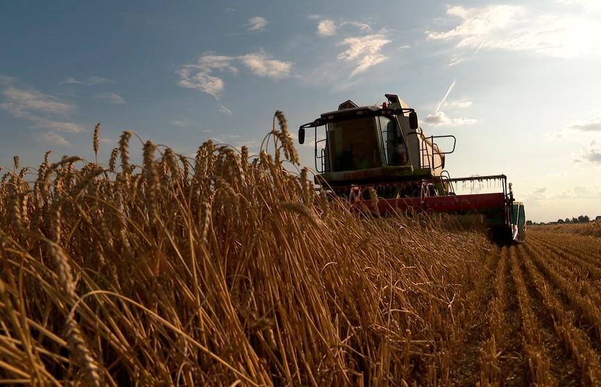 Лукашенко поручил министру сельского хозяйства мобилизовать все силы на уборке урожая