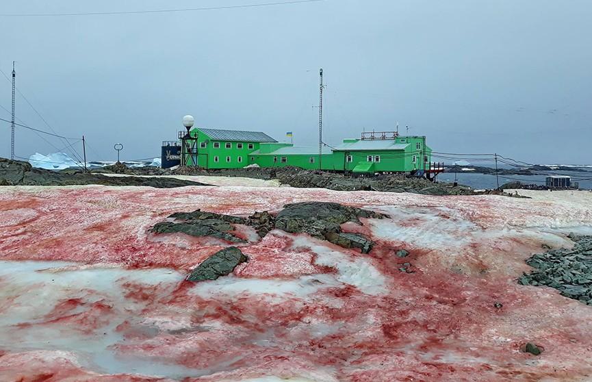 «Арбузный» снег засыпал станцию украинских учёных в Антарктиде