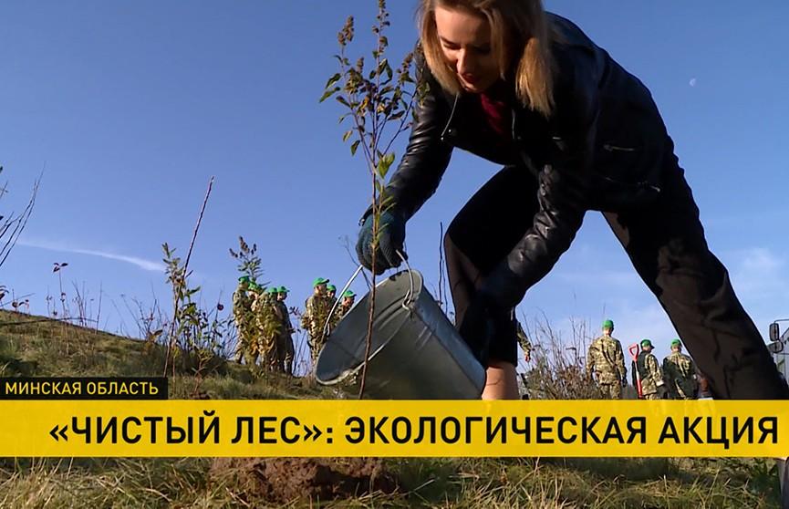 Сотрудники телеканала ОНТ приняли участие в экологической акции «Чистый лес»