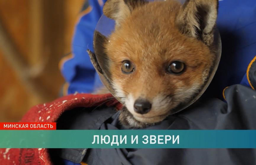 Отличить мучителя от спасителя. Репортаж о том, как спасают диких и домашних животных