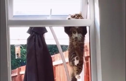 Кот попытался через форточку попасть домой и стал звездой TikTok