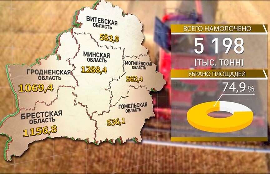 Белорусским аграриям осталось убрать четверть площадей зерновых