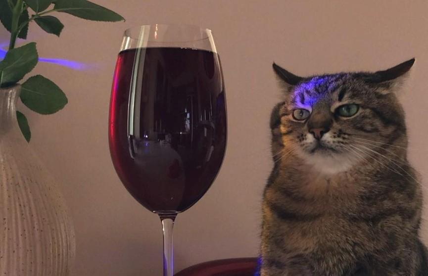 Хозяйка кота Степана, прославившегося в Сети, объяснила его вечно недовольный вид