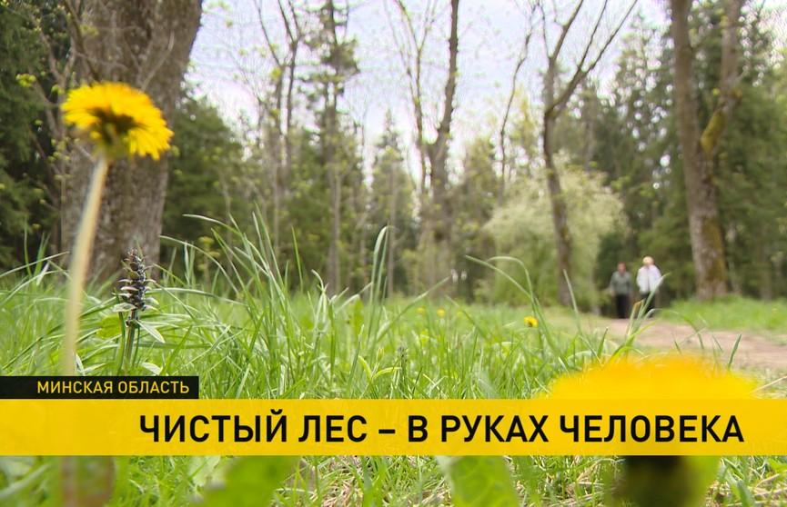 Вандалы мусорят на территории памятника природы «Дубрава». Как спасти зеленую зону?