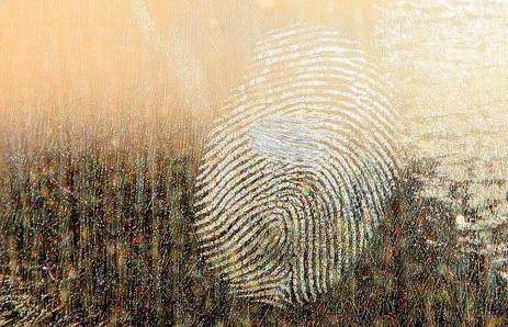 Следователи раскрыли преступление по отпечатку пальца