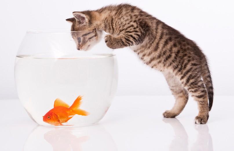 Кот разговаривает с рыбами! Только посмотрите, как эмоционально! (ВИДЕО)