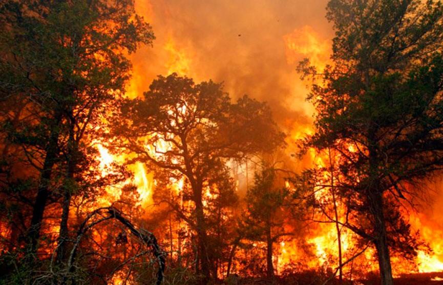 В Колумбии не утихают лесные пожары: огонь подбирается к столице