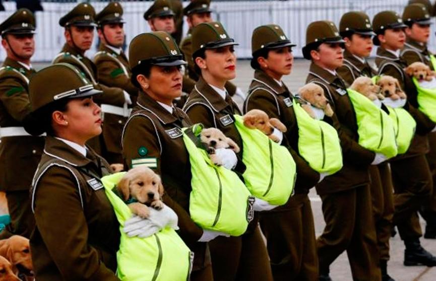 Милые кадры из Чили: на военный парад вынесли щенков в сумках