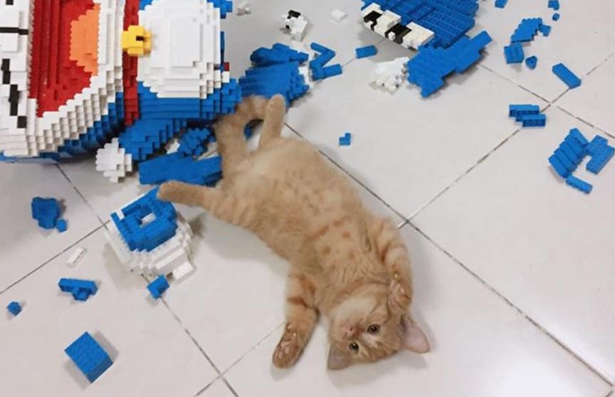 Кот разрушил фигуру из конструктора с тысячами деталей и избежал наказания