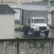 Следователи проводят проверку по факту жестокого обращения с коровой в Лиде