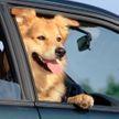 Сходил за хлебушком: собака утопила машину хозяина в пруду, пока тот был в магазине