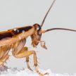 Брак разрушили тараканы