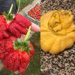 10 растений-мутантов, которые способны удивить любого (ФОТО)