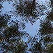 Запрет на посещение лесов ввели в четырех районах Гродненской области