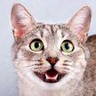 Защитник! Реакция кота на фильм  «Король Лев» взорвала соцсети