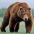 Медведь разоряет ульи и держит в страхе жителей Ивацевичского района