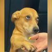 Самое очаровательное видео дня: пес гипнотизировал хозяйку взглядом, чтобы она дала ему лакомство. Посмотрите, какой милый!