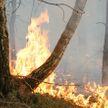 Почти 900 лесных пожаров произошло  в Беларуси с начала года
