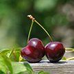 Что происходит с организмом, когда вы едите черешню?