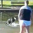 В Сети стало популярным видео с псом, наотрез отказывающимся вылезать из пруда