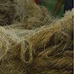 Уборка льна: аграрии подвели итоги
