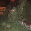 Непогода в Бресте: дерево вырвало с корнем