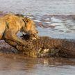 Необычное противостояние животных вылилось в супербитву!