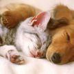 Кот решил помирить двух собак, которые ругались из-за игрушки. Посмотрите, что он сделал! (ВИДЕО)