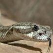 Девушка отомстила змее за брата: убила и пустила на ремень