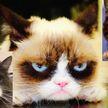 10 фактов о кошках, которые вы точно не знали. А пятый вас просто удивит!
