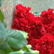 «Беларусь помнит»: в преддверии 3 июля вся страна вспоминает героев войны