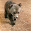 Медвежонок поселился на ферме в Борисовском районе. Посмотрите, какой милый (ФОТО)