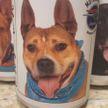 Неожиданно! Женщина нашла потерявшуюся собаку на пивной этикетке