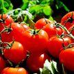 Как выбрать самые вкусные томаты: 3 простых способа