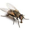 Кот увидел большую муху – такой реакции от него никто не ожидал! Посмотрите, вы 100% будете смеяться! (ВИДЕО)