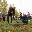 Аллея семейных деревьев появилась в Бресте