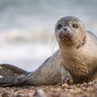 Шотландские ученые научили тюленей исполнять мелодию из «Звёздных войн»