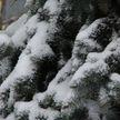 Снег остается на весь февраль – наслаждаемся последним месяцем зимы!