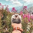 Самый счастливый в мире еж стал звездой Instagram (ФОТО)