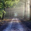Беларусь отмечает День работников леса