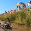 Упасть в грязь лицом: чемпионат мира по болотному плаванию состоялся в Великобритании