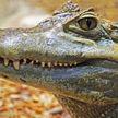 Крокодил открыл для себя прелесть водной горки (ВИДЕО)