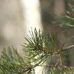Запреты и ограничения на посещение лесов сохраняются в Гомельской области