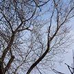 Ребенку в Бобруйске зажало ногу стволами дерева