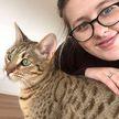 Кошка устроила потоп и нанесла своим хозяевам ущерб в 40 тысяч долларов