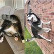 Они рассмешили Сеть до слез: 10 фотографий котов и собак, которые «сломались»